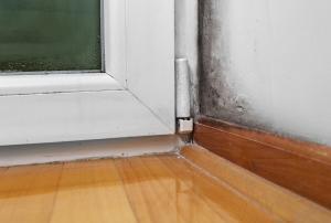 Mold Inspection Services St. Louis
